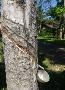 rootsreis rubberplantage