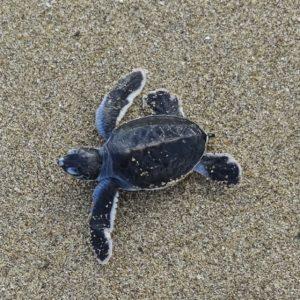 schildpad spotten op Java