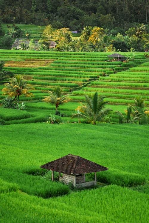 Fahrer und guide Java und Bali